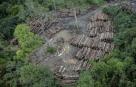 CMA quer explicações sobre fiscalização e desmatamento na Amazônia  Fonte: Agência Senado